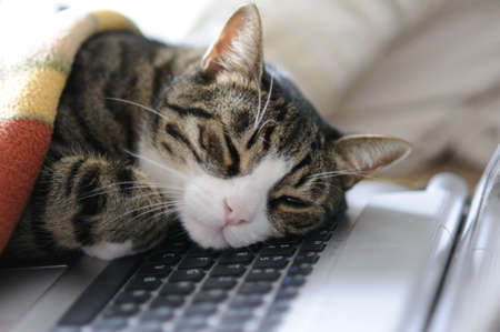 cat taking a quick power napping on laptop