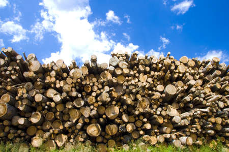 boles: Shot of woodpile beyond blue cloudy sky. Stock Photo