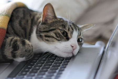 Exhausted cat taking a break on his laptop