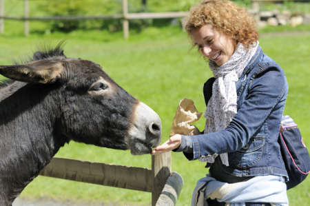 Shot of beautiful girl feeding donkey at zoo Stock Photo