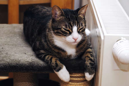 Cute cat sleeping and relaxing on heater.