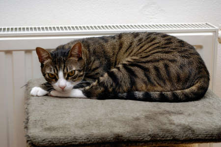 Cute cat sleeping and relaxing on heater. photo