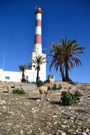 sheep warning: Beautiful Lighthouse on the island Djerba in Tunisia