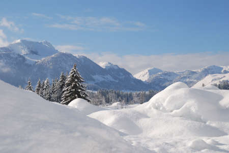 Trees snow covered in austrian winter landscape Stock Photo - 12394272