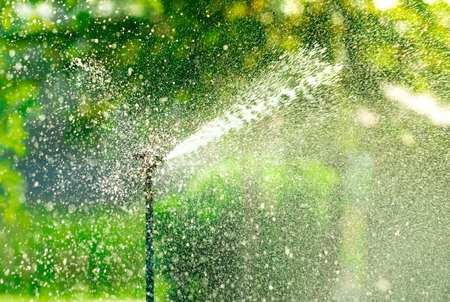 Automatic lawn sprinkler watering green grass. Sprinkler with automatic system. Garden irrigation system watering lawn. Water saving or water conservation from sprinkler system with adjustable head. Stock Photo