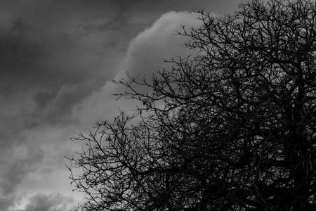 Silhouette dead tree  on dark dramatic grey sky and clouds background for  scary, death, and peace concept. Halloween day background. Art and dramatic on black and white. Despair and hopeless concept.