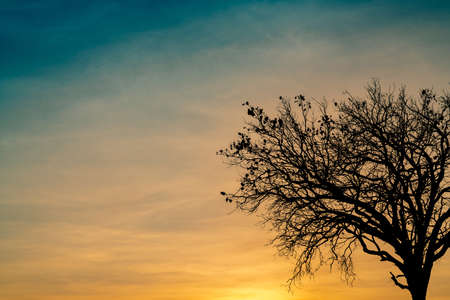 Silhouette dead tree on beautiful sunset or sunrise on golden sky. Background for peaceful and tranquil concept. Light for hope and spiritual. Awakening and inspiration concept. Soul and respect. Stock Photo