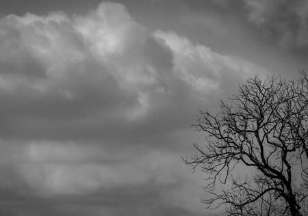 Silhouette dead tree  on dark grey sky and white clouds background for  scary, death, and peace concept. Halloween day background. Art and dramatic on black and white. Despair and hopeless concept.