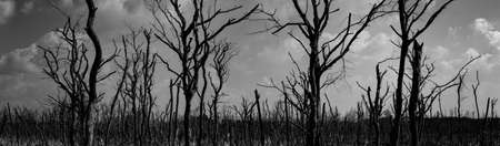 Silhouette dead tree  on dark dramatic sky background for scary or death. Halloween night. Hopeless, despair, and lament concept. Scary forest. Dramatic horror night on Halloween day background.