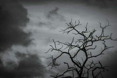 Silhouette dead tree on dark dramatic sky background for scary or death. Leafless tree branch. Hopeless, despair, sad and lament concept. Scary forest. Dramatic horror night on Halloween day.