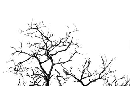 Silhouette dead tree and branch isolated on white background. Black branches of tree backdrop. Nature texture background. Tree branch for graphic design and decoration. Art on black and white scene.