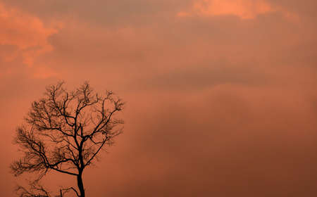 Silhouette dead tree on orange sunset sky and clouds. Sad, death, and grief background. Nature landscape. Beauty in nature. Leafless tree with copy space for inspiration or quote abstract background.