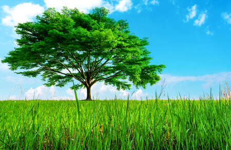Big green tree with beautiful branches and grass field. Lawn in garden with blue sky and clouds . Green grass land. Nature landscape. Go green, Eco, and carbon credits concept. Fresh environment.