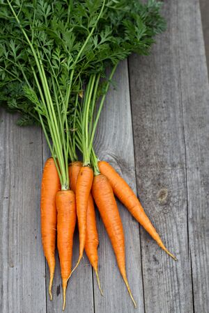 harvested: Freshly harvested carrots with green leaves Stock Photo