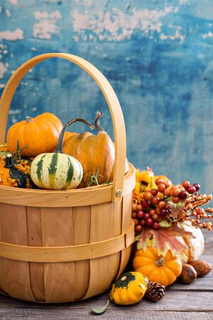 harvest basket: Pumpkins and variety of squash in a harvest basket Stock Photo