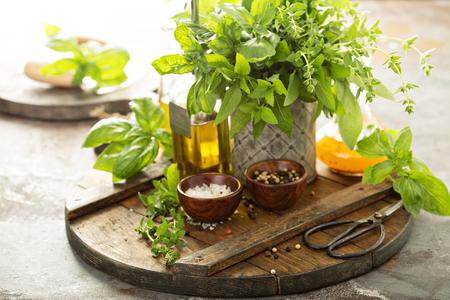 Cooking with fresh herbs Foto de archivo