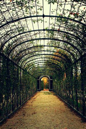 arcuate: Ad arco e il fiore Archivio Fotografico