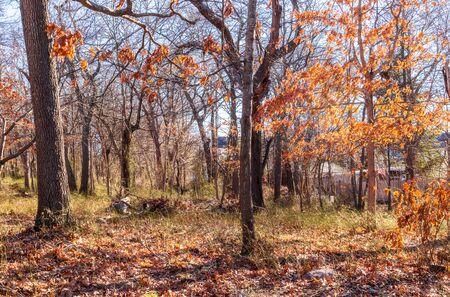 Winter landscape without snow, Faxon Park, Quincy, Massachusetts 版權商用圖片