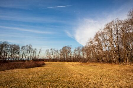 Landscape with bare trees and dry grass near Newport, Rhode Island on a warm winter afternoon. 版權商用圖片 - 143512490
