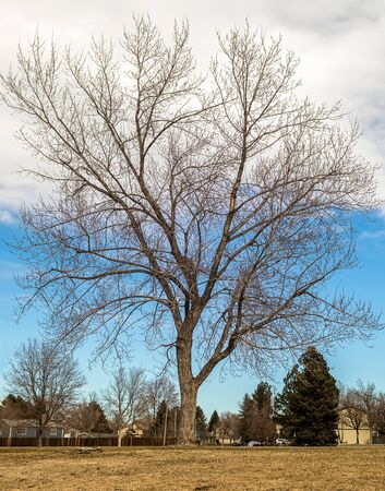 Beautiful landscape with bare trees in the small neighborhood park at the end of winter, Aurora, Colorado