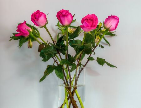 Bouquet of pink roses in the glass vase on the white background. 版權商用圖片 - 148288977