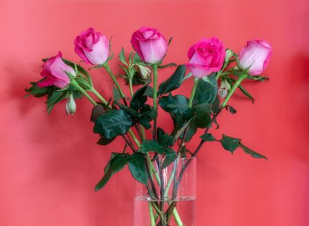Bouquet of pink roses in the glass vase on the red background.