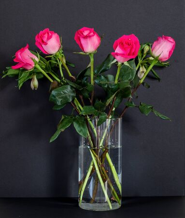 Bouquet of pink roses in the glass vase on the black background.