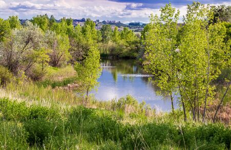 Trees and pond with reflection in a small American neighborhood, Aurora, Colorado 版權商用圖片 - 149833989