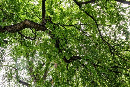 Green tree branches against a sky on a sunny day in Washington park, Denver, Colorado 版權商用圖片 - 148940067