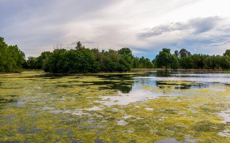Washington park in Denver, Colorado, on a spring day. The lake with algae.