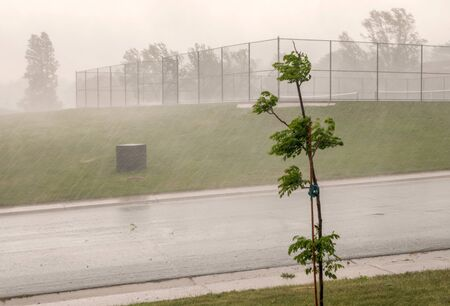 Heavy rain, young tree, road, and the neighborhood tennis court  on a summer day in Colorado 版權商用圖片 - 148940003