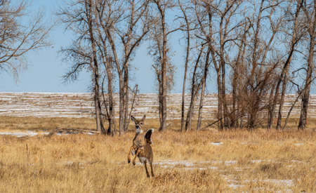 An adorable deer at Rocky Mountain Arsenal National Wildlife Refuge, Colorado.
