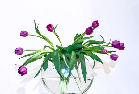Purple tulips in a glass vase on a white background.