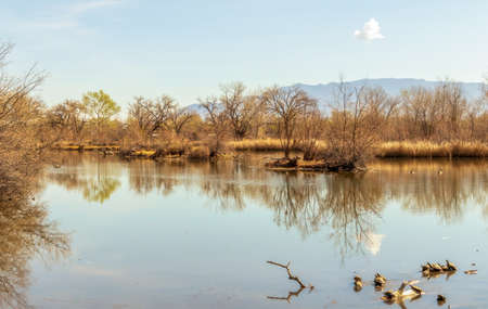 Scenic pond with turtles in Rio Grande Nature Center State Park, Albuquerque, New Mexico 版權商用圖片