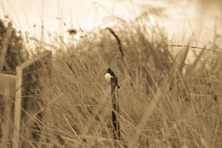 sitter: Fence Sitter