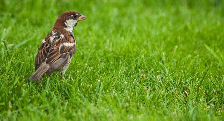 babysitting: Bird on a meadow Stock Photo
