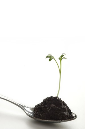 New life sprouting from a spoon of soil photo