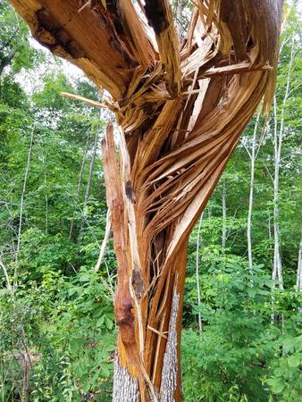 Tree hit by lightning splintered Stock Photo