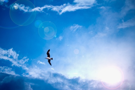 bright blue sky and sun light rays looking serene with bird Stock Photo - 13126376