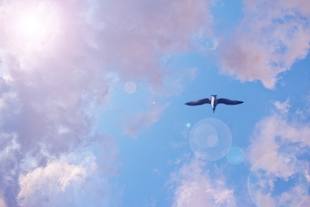 seagull flying free in bright blue sky