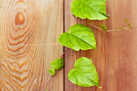 growth of green leaves, concept of ecology Stock Photo - 17276788