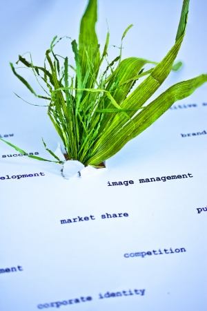 leaves growing out of paper with business concepts, metaphor of successful green business photo