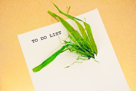leaves growing out of a business to do list Stock Photo - 17726838