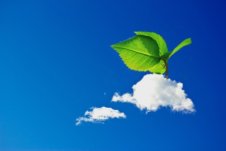 growth of leaves out of clouds, surreal image representing the growth of influence of the green economy and the concern of sustainability photo