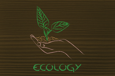 green economy and sustainability: hand holding small plant with newborn leaves photo