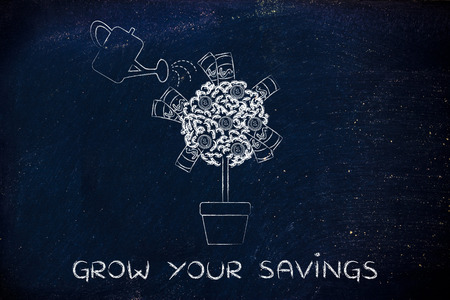 capital gains: grow your savings: plant with banknotes and coins between the leaves and water can Stock Photo