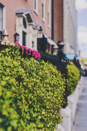 leinster: DUBLIN, IRELAND - 10th June, 2017: fence with flowers and street bokeh in Dublin city centre Editorial
