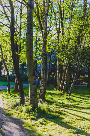 green trees with sunlight peaking through in city park on a sunny summer day Stock Photo