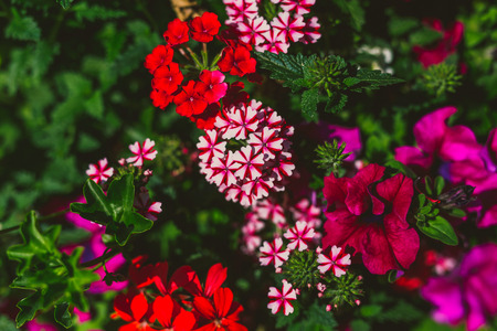 colorful mixed flowers shot at shallow depth of field Stock Photo - 104383407