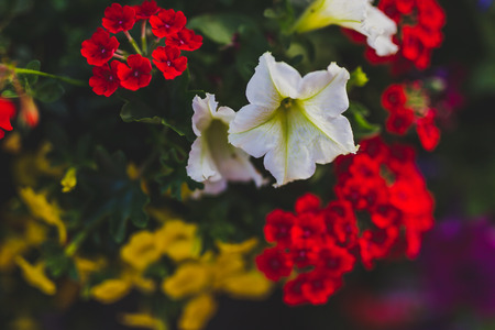colorful mixed flowers shot at shallow depth of field Stock Photo - 104383409